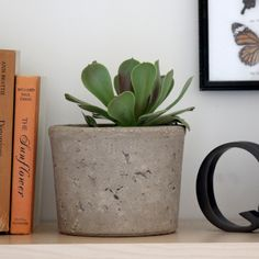Modern cement planters with old packaging // Apartment Therapy #diy #decor
