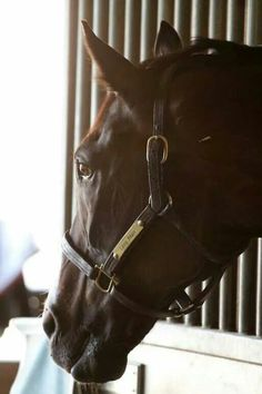 Lava Man photo by Doug O'Neill Racing Stables 8/18/2014