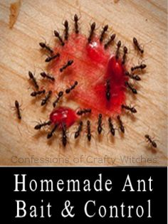 There is a commercial ant killer on the market made with the first bait that uses borax, and it REALLY works well, but at first it seems like you have more ants because they will flock to it. 2 to 3 days later they will vanish for good though... so dont panic just let them feed away.
