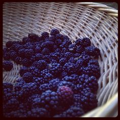 Blackberries are delicious … especially in Abruzzo;)    Photo: Ida Di Marzio