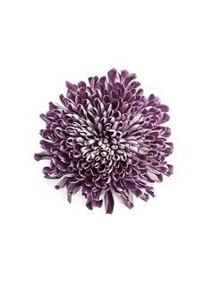 Empress Chrysanthemum