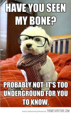 Hipster dog lost his bone