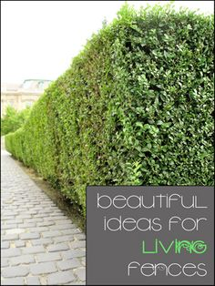 Love these great ideas for beautiful ideas for living fences!