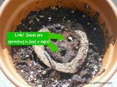 #GroAbles from Miracle-Gro Really Make Gardening Easy.  These sprouted in just 5 days!