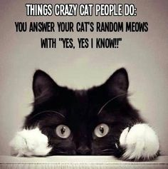 You know....everyday stuff...NOT crazy at all!
