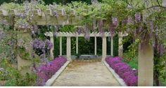 ball, purple flowers, court, pergola, landscape designs, wisteria lane, bold colors, san francisco, garden