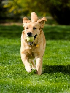 How to make exercise fun for your dog or cat! | via @Woman's Day #pet #health #fitness