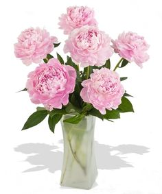 Crazy for Peonies