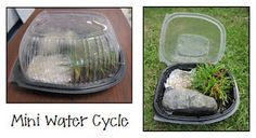 Mini water cycles using a rotisserie container - have each team create their own little mini water cycle to observe!