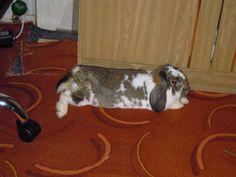 RT @Bunny Buddhism: A bunny who resists change resists life.