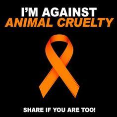 Im against animal cruelty quotes animals quote awareness