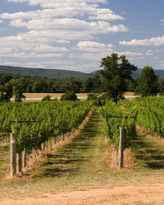 Beautiful Breaux Vineyards