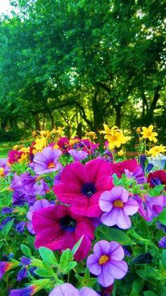 flowersgardenlove:    Backyard Color Flowers Garden Love