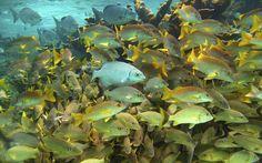Snorkelling the barrier reef at Caye Caulker, Belize