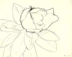 Magnolia by Henri Matisse