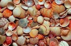 An image of seashells which I really like!