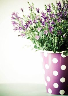 lavender and dots.... can't go wrong!
