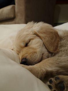 so cute, sleepy puppy