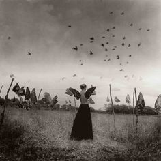 As soon as my wings emerged, the temptation to join the birds was impossible to ignore. So I flew... and never looked back.