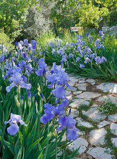 flagstone path through iris
