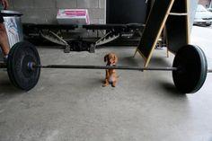 Pupping Iron