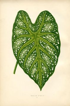 Printable Wall Decor Botanical Leaf