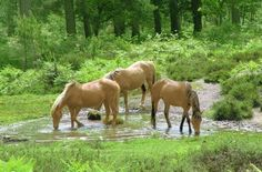free hors, hors dream, sweet anim, horses, forest poni, place