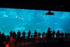 SEA Aquarium – Sentosa, Singapore