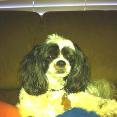 My dog Sassy:)