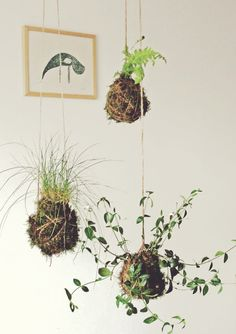 Kokedama Japanese String Gardens DIY Tutorial