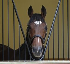 Frankel's book of mares is maxed out for 2013