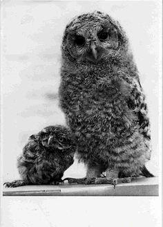 Mamma owl with a baby owl Pinned by www.myowlbarn.com