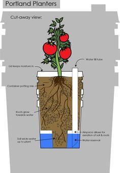 Graphic of sub-irrigated bucket planters. Portland Planters.