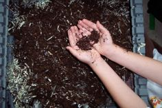 Read about how author Kate Messner set up a vermicomposting bin in her family's basement as research for MARTY MCGUIRE DIGS WORMS.