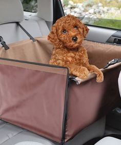 Love this Pet Booster Car Seat & Leash on #zulily! #zulilyfinds