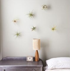 DIY air plants on the wall