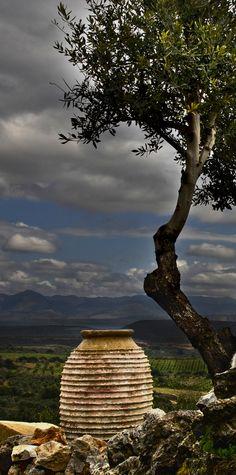 Jar & Olive Tree | Greece