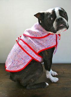 Adorable Boston in vintage dog coat