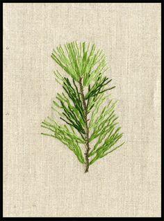 from Lauren Finley bog http://laurenfinley.files.wordpress.com/2010/03/pine-needles.gif