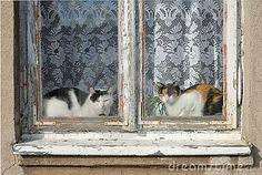 Cats by Andrzej Tokarski, via Dreamstime