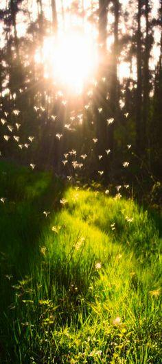 ~ meadow sunrise ~