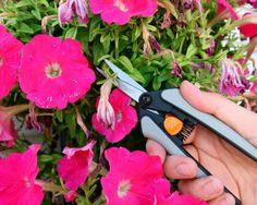 plant, garden glove, deadhead flower, flower garden, flower happi