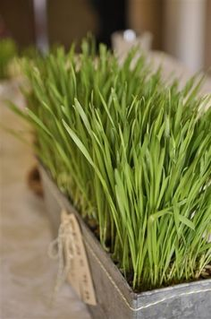 Spring = green grass
