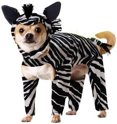 Zebra Dog Costume - Dog Halloween Costumes from EntirelyPets