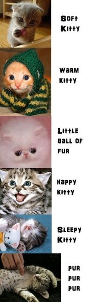 Kitty. After kitty. After kitty.