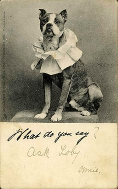 """Pit Bull photo postcard. """"What do you say? Ask Loby"""""""