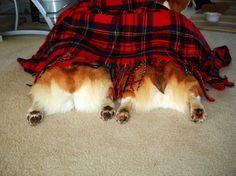 Snuggle butt. Snuggle snuggle snuggle butt.