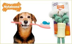 Keep your dog's teeth clean with the awesome Nylabone Dental Rope Toy - $15