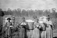 Black American slave women on cotton plantation in the 1800's.