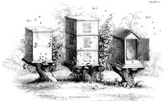 Instant Art Printable - Vintage Beehives - The Graphics Fairy